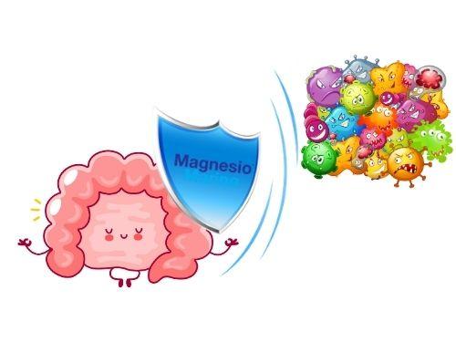 Illustrazione dell'azione difensiva da germi e batteri sull'intestino del Magnesio Marino