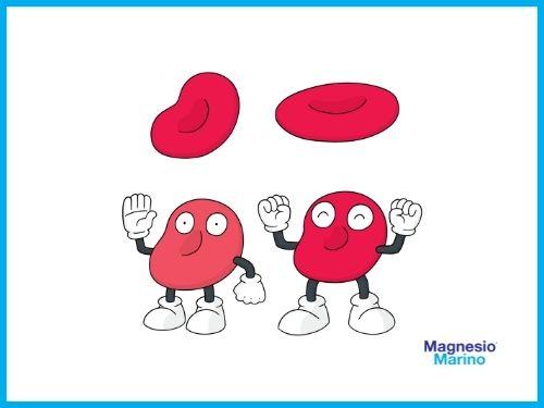 Immagine di due globuli rossi molto allegri